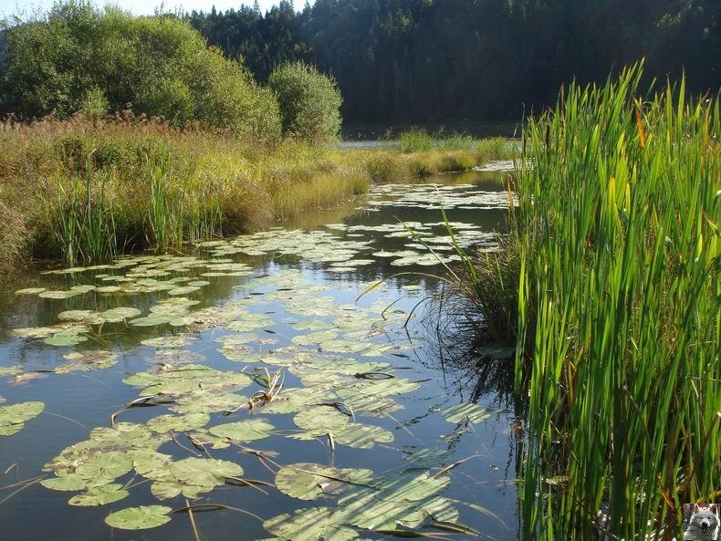 Le lac de Lamoura (39) 0043