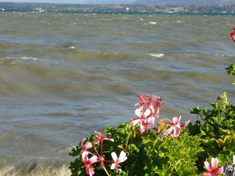 On a démonté le Lac Léman - 20-10-2007 0008