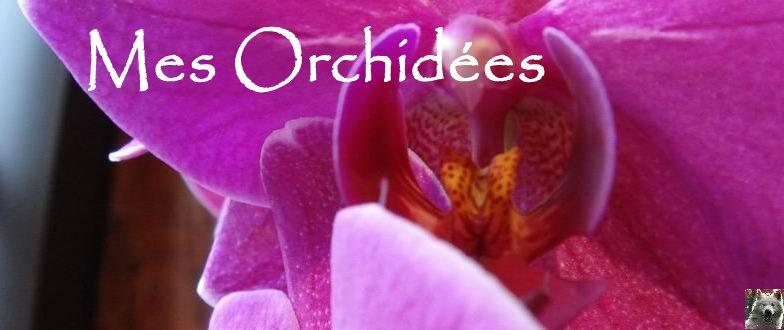 Mes Orchidées - 24 juillet 2008 Diaporama