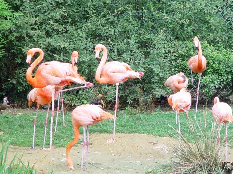 Quelques pensionnaires du Parc ornithologique des Dombes (01) 0004