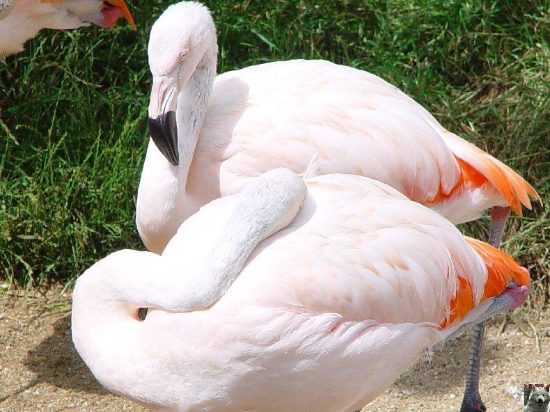 Quelques pensionnaires du Parc ornithologique des Dombes (01) 0004c
