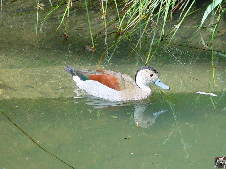 Quelques pensionnaires du Parc ornithologique des Dombes (01) 0006