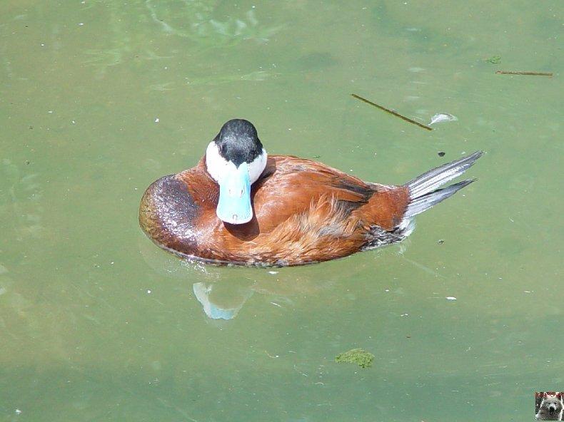Quelques pensionnaires du Parc ornithologique des Dombes (01) 0007