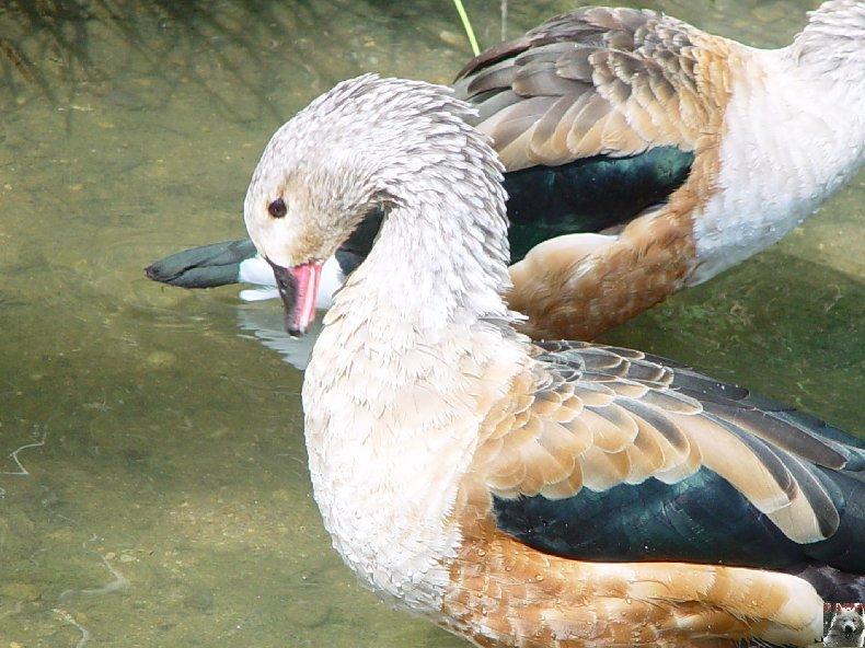Quelques pensionnaires du Parc ornithologique des Dombes (01) 0009