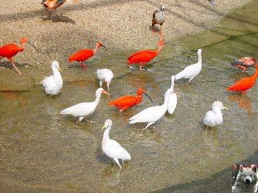 Quelques pensionnaires du Parc ornithologique des Dombes (01) 0015