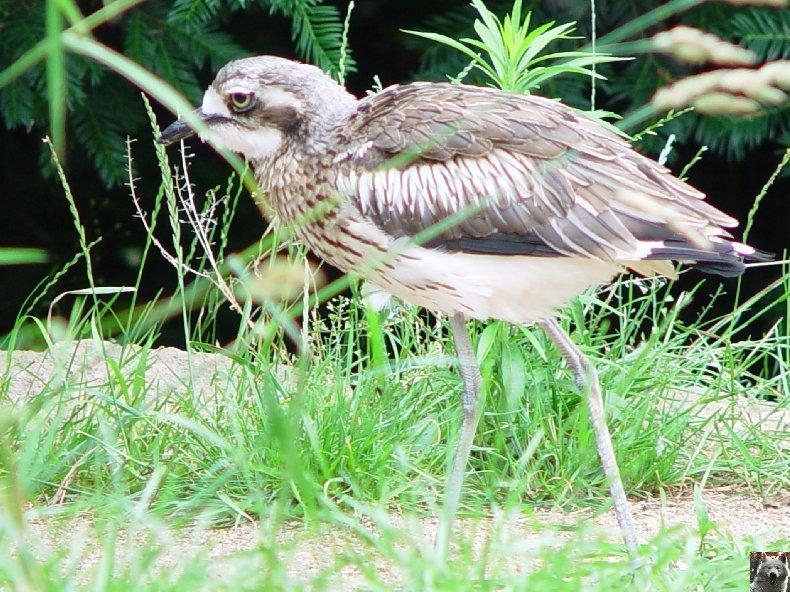 Quelques pensionnaires du Parc ornithologique des Dombes (01) 0018