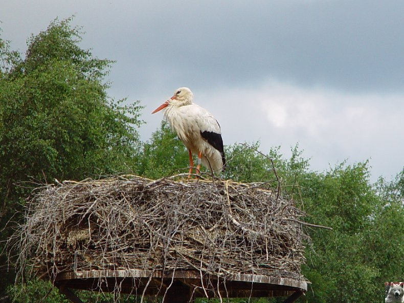 Quelques pensionnaires du Parc ornithologique des Dombes (01) 0019