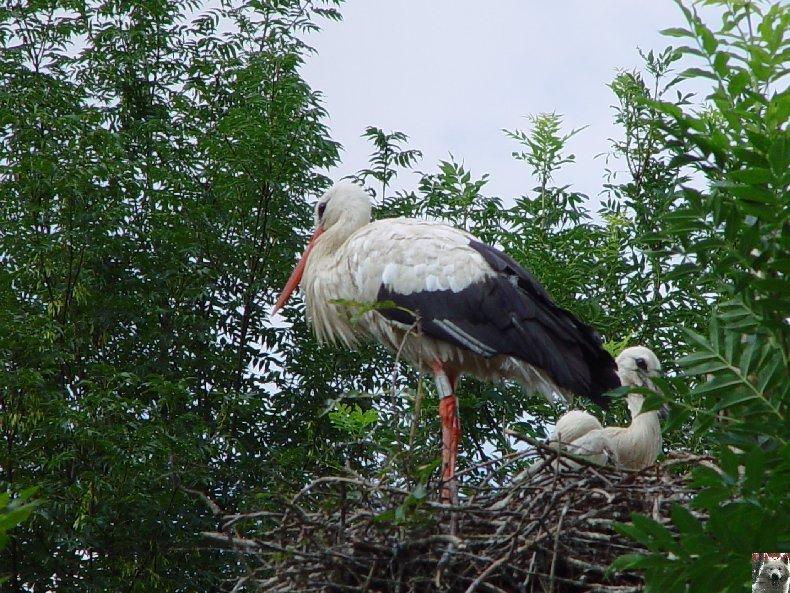 Quelques pensionnaires du Parc ornithologique des Dombes (01) 0022