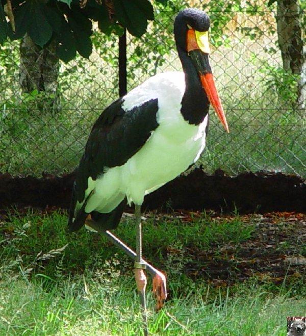 Quelques pensionnaires du Parc ornithologique des Dombes (01) 0023
