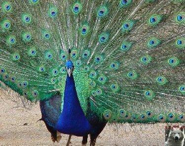 Quelques pensionnaires du Parc ornithologique des Dombes (01) 0031