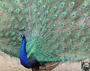 Quelques pensionnaires du Parc ornithologique des Dombes (01) 0032