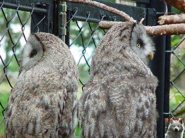 Quelques pensionnaires du Parc ornithologique des Dombes (01) 0036