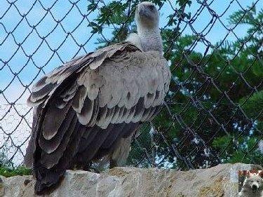 Quelques pensionnaires du Parc ornithologique des Dombes (01) 0039