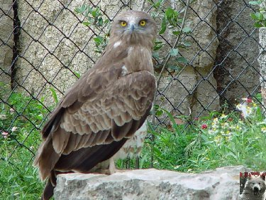 Quelques pensionnaires du Parc ornithologique des Dombes (01) 0040