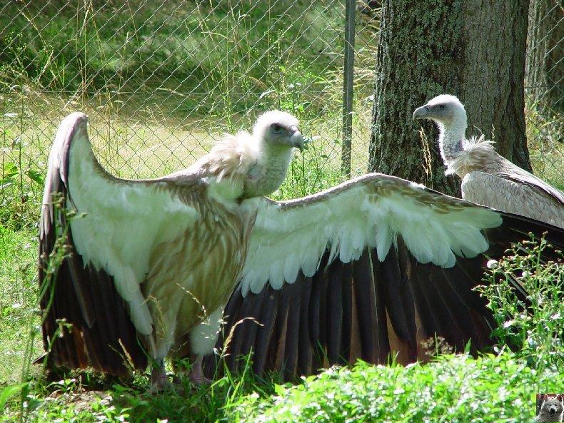 Quelques pensionnaires du Parc ornithologique des Dombes (01) 0044