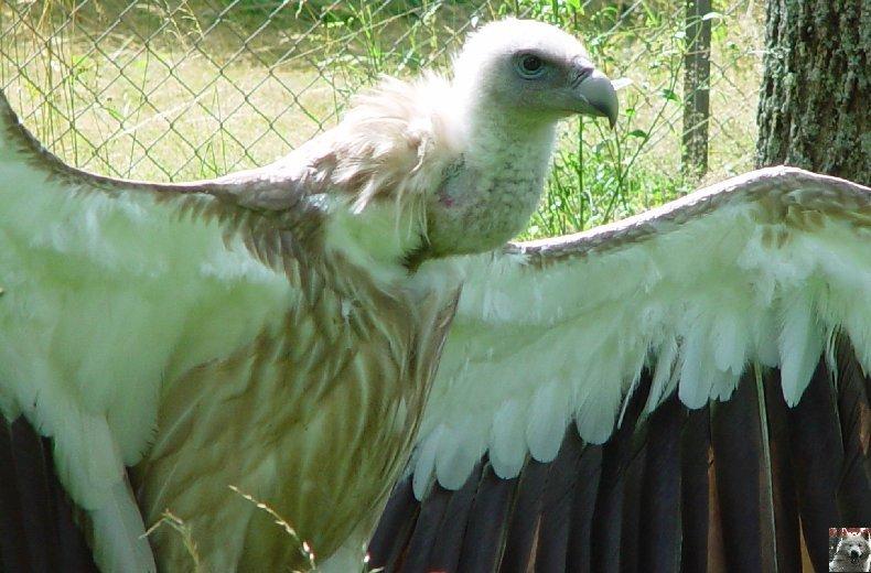 Quelques pensionnaires du Parc ornithologique des Dombes (01) 0045