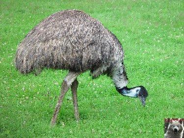 Quelques pensionnaires du Parc ornithologique des Dombes (01) 0049