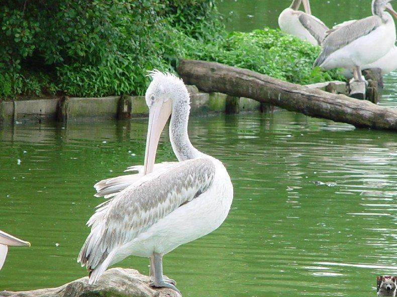 Quelques pensionnaires du Parc ornithologique des Dombes (01) 0050