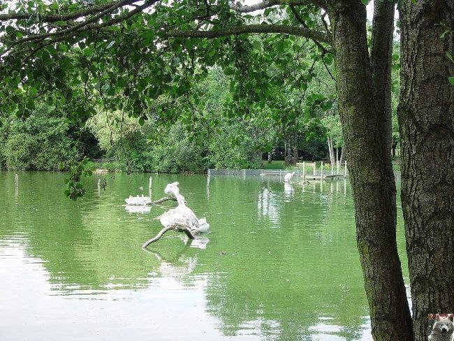 Quelques pensionnaires du Parc ornithologique des Dombes (01) 0051