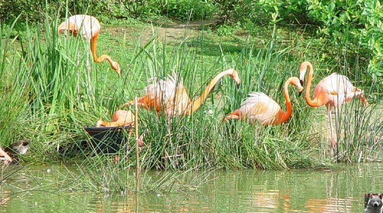 Quelques pensionnaires du Parc ornithologique des Dombes (01) 0061