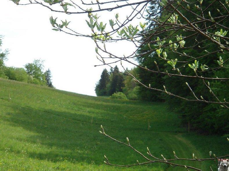 A la découverte de quelques paysages hauts-jurassiens 0039