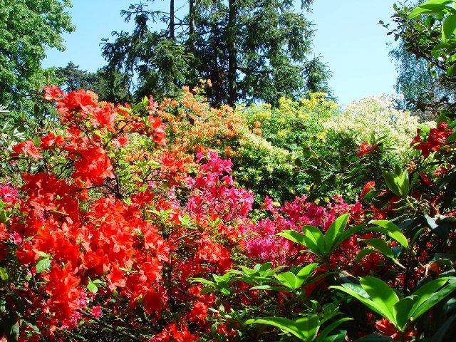 Rhododendrons au jardin botanique de gen ve ge ch for Jardin botanique geneve