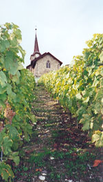 Le vignoble côté Léman (VD) 0003a