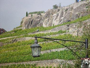 Le vignoble côté Léman (VD) 0011