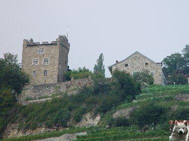 Le vignoble côté Léman (VD) 0013