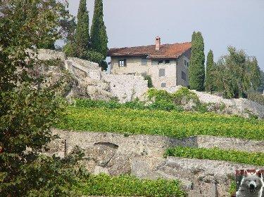 Le vignoble côté Léman (VD) 0014