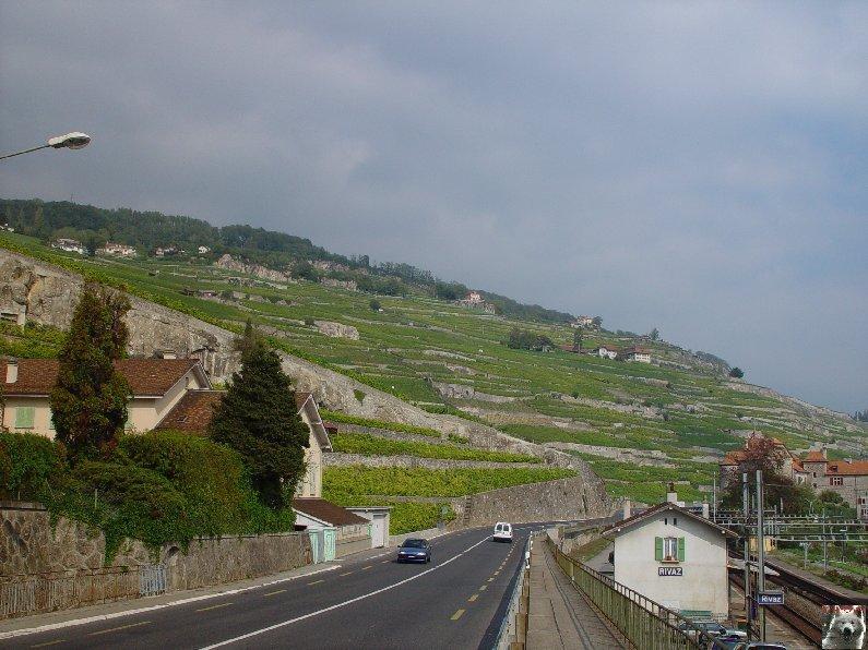 Le vignoble côté Léman (VD) 0015