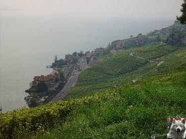 Le vignoble côté Léman (VD) 0017