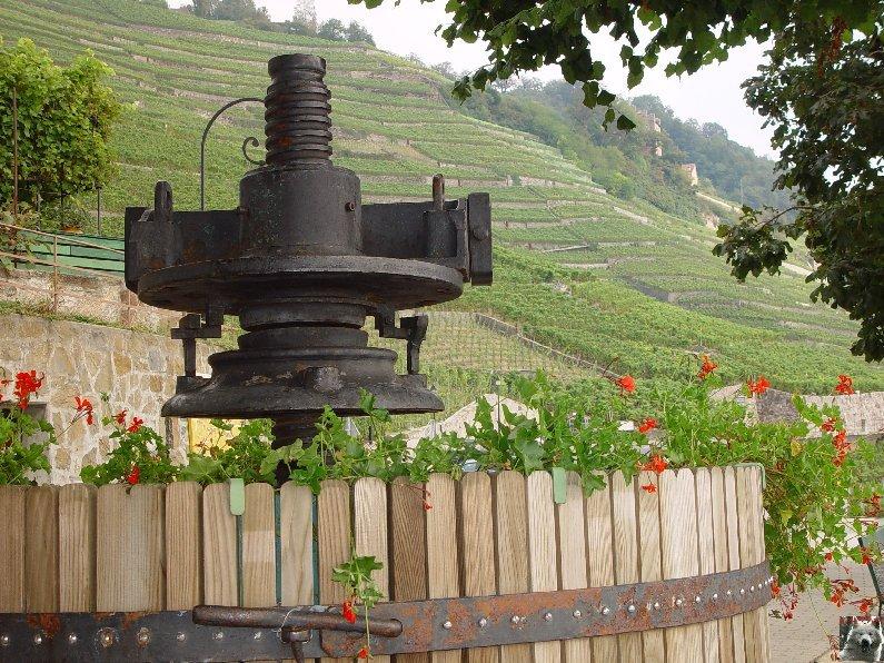 Le vignoble côté Léman (VD) 0020