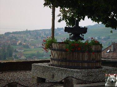 Le vignoble côté Léman (VD) 0022