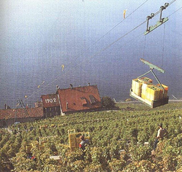 Le vignoble côté Léman (VD) 0027