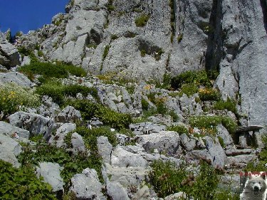 Les Rochers de Naye (VD) 0029